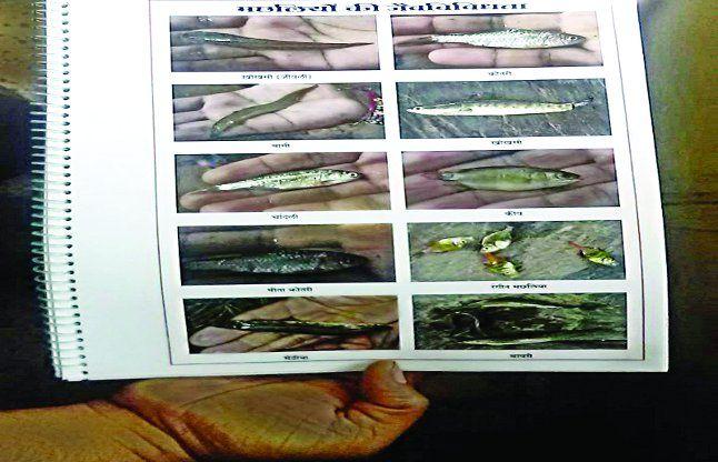 दलपत में खोखसी, चांदली समेत 10 देसी मछलियों का होगा संरक्षण