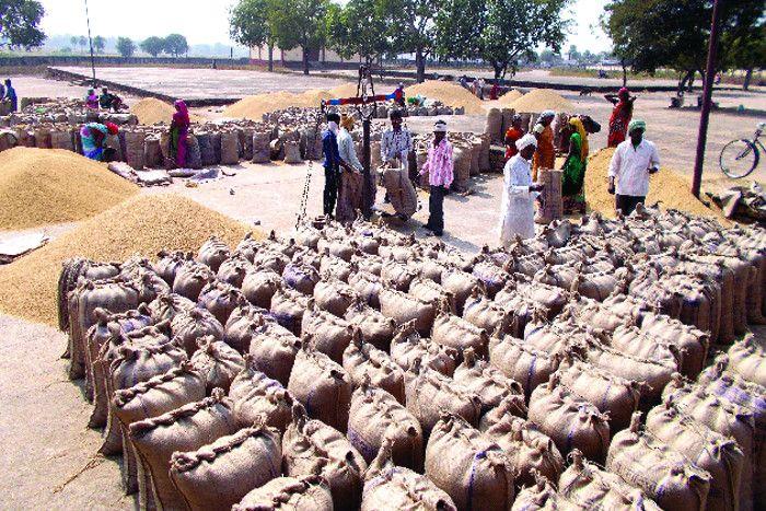 सोसाइटी में दिनदहाड़े किसानों से अवैध वसूली, मंडी में खरीदार तक नहीं