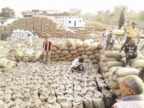 खरीदी केंद्र और गोदाम के बीच गायब हो गया साढ़े 13 हजार टन अनाज