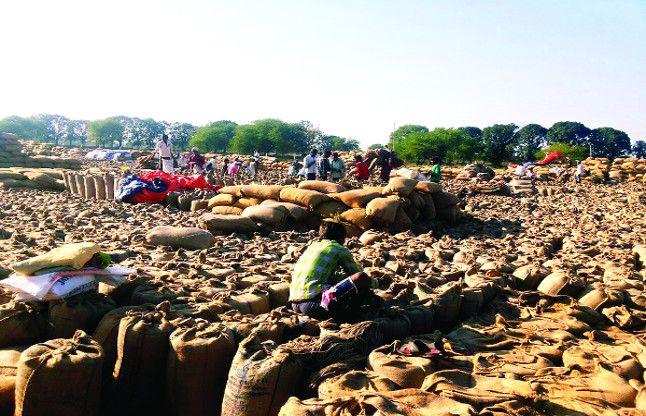 नोटबंदी: किसानों से खरीदा 116 करोड़ का धान, 6 करोड़ देकर कहा कैश नहीं