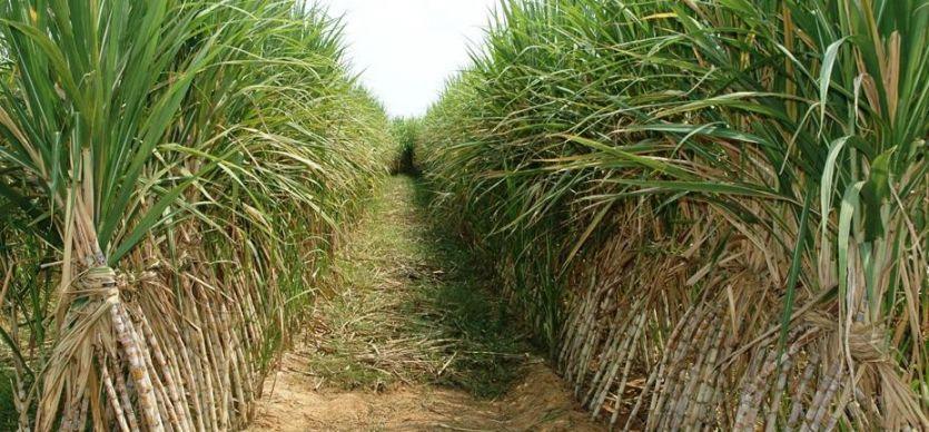 किसानों को भाजपा के राष्ट्रीय अध्यक्ष से ये हैं उम्मीदें