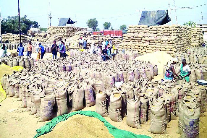 परिवहन नहीं होने से मण्डी में लाखों क्विंटल धान जाम, किसान हो रहे परेशान