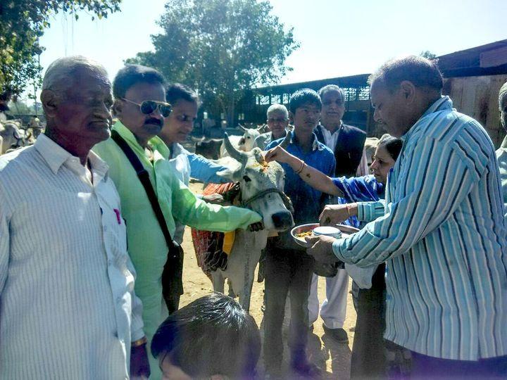 अब बुढ़ी-बीमार गायों की ऐसे होगी सेवा...