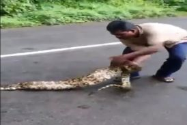 anaconda video in hindi