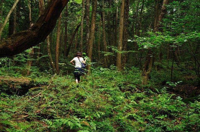 जो इस जंगल में गया, वो कभी वापस नहीं आया, जानें क्यों?
