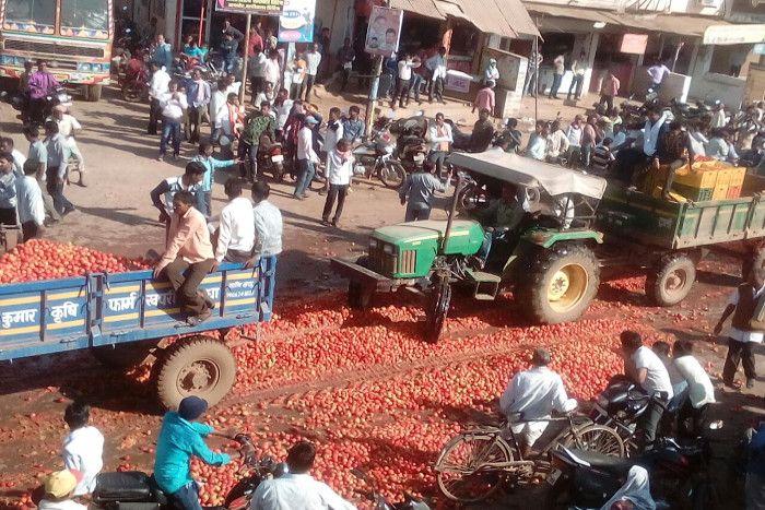 मंडी में नहीं मिला भाव तो गुस्साए किसानों ने सड़कों पर फेंका 20 ट्रैक्टर टमाटर