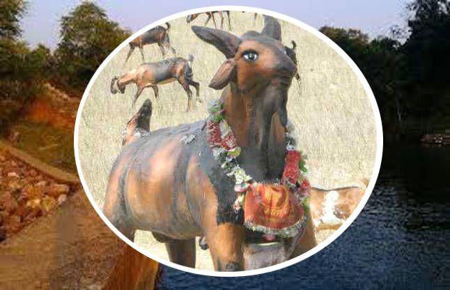इस गांव में मन्नतें पूरी करता है बकरा, साल में 2 बार होता है भव्य उत्सव