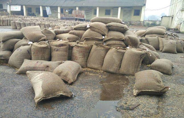 मावठाकी बारिश: इन फसलों को फायदा और इसे होगा नुकसान
