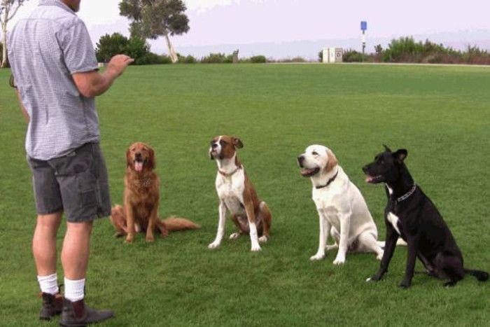 अब आवारा कुत्ते करेंगे आपकी सुरक्षा, यूनिवर्सिटी में दी जाएगी ट्रेनिंग