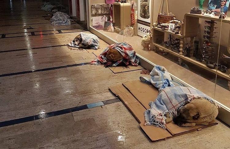 बर्फ़बारी से परेशान कुत्तों के लिए शॉपिंग मॉल ने खोले अपने दरवाजे