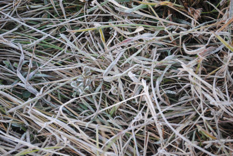 वैज्ञानिकों ने कहा, 3 दिनों में बढ़ेगी ठंड, फसलों को ऐसे बचाएं किसान