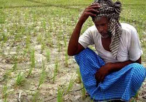 223 किसानों को ही मिला धान समर्थन मूल्य योजना का लाभ