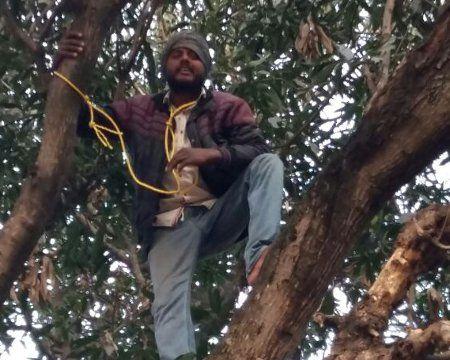 Video: दूध के बकाया रुपए मांगने पेड़ पर चढ़ गया युवक, कहा- कूद कर दे दूंगा जान