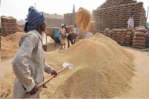 इंदौर मंडी में हुआ नए गेहूं का श्रीगणेश, कम आवक से बढ़ेगा आयात