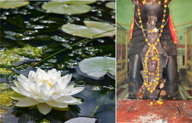 इस तालाब से निकले थे भगवान विष्णु, यहां खिलते हैं दुर्लभ और अनोखे कमल