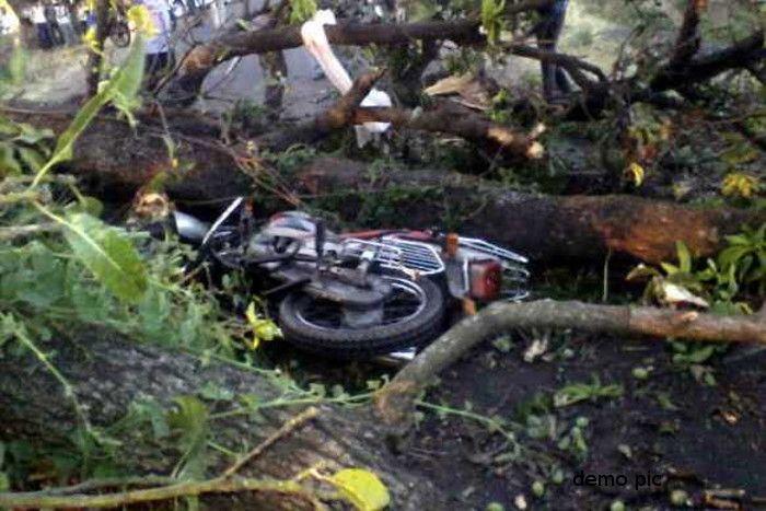 नहीं पता था एेसे आ जाएगी मौत, बाइक पर अचानक गिरा पेड़, पति की मौत, देवर-भाभी गंभीर