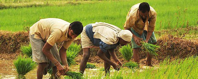 Budget 2017: बजट में किसानों के लिए हुई येघोषणाएं, किसानों ने कहा