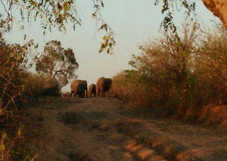 खदेडऩे गए दो युवकों को हाथियों ने रौंदा, शव लेकर आ रहे वन अमले को दौड़ाया
