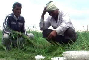 मौसम के बदले तेवरों से किसानों में चिंता