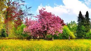 क्या आपको पता है कैसे उत्पत्ति हुई वसंत ऋतु की, जानिए पौराणिक कथा