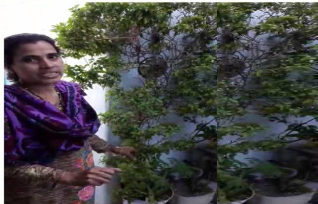 मुस्लिम परिवार में चमत्कार कर रहा है 'तुलसी' का ये पौधा, वैज्ञानिक भी हैरान