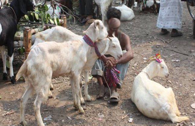गर्भवती को महंगा पड़ा बकरियों का विरोध, मालिकों ने पेट में ही मारा