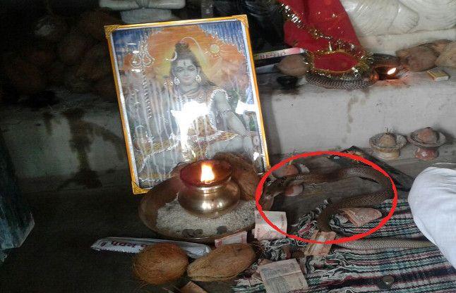 चौथे दिन भी भगवान शिव के पास शांत बैठे रहे नाग-नागिन, देखने लगी कतार
