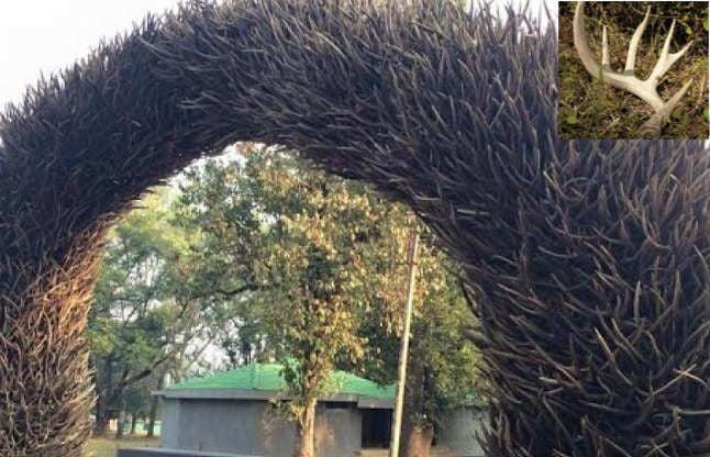 5 हजार किलो हिरण के सींगों से बना है ये अनोखा गेट, 70 साल किए एकत्रित