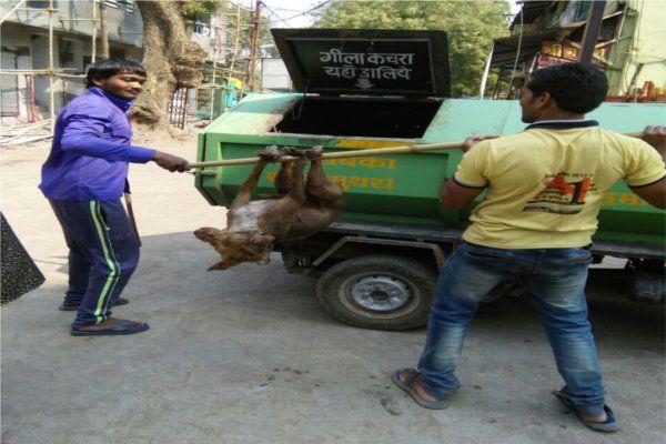 मेनका गांधी ने दिल्ली से फोन कर निगम आयुक्त को कहा, बंद करो पशु हिंसा