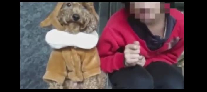 बेजुबान जानवर में भी जान होती है, भूल जाते हैं लोग, इस लड़की ने अपने डॉगी के साथ जो किया वो हैरान कर देगा