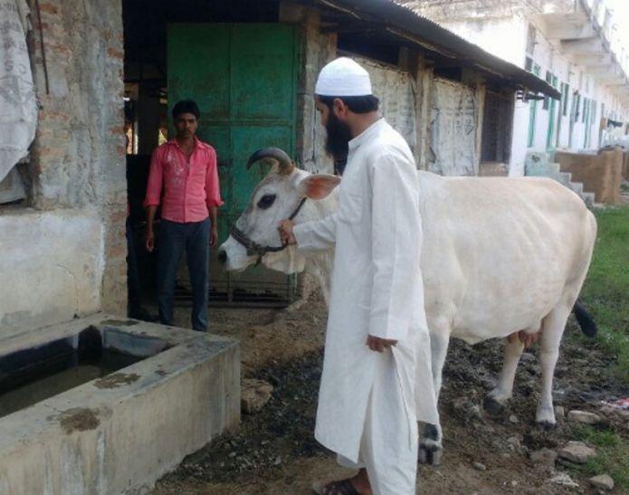 इस मस्जिद में मुस्लिम पालते हैं गाय, आज भी जीवित है यहां 65 साल पुरानी परंपरा