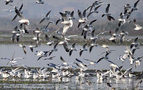 ओखला पक्षी विहार जाने वालों के लिए खुशखबरी
