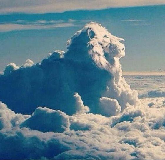 जू में बादलों के बीच जानवरों का होगा दीदार, गर्मी से मिलेगी बेजुबानों को राहत