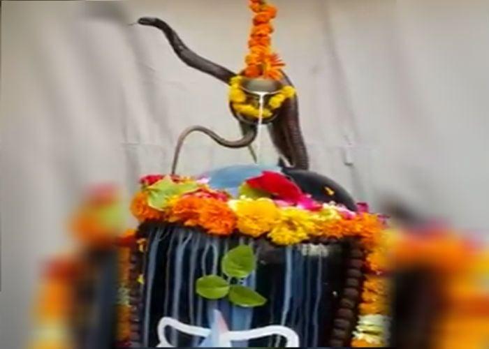 इस पेड़ के तने में रहते हैं भगवान शिव, पत्ते और टहनियों में समाए हैं ये देवता