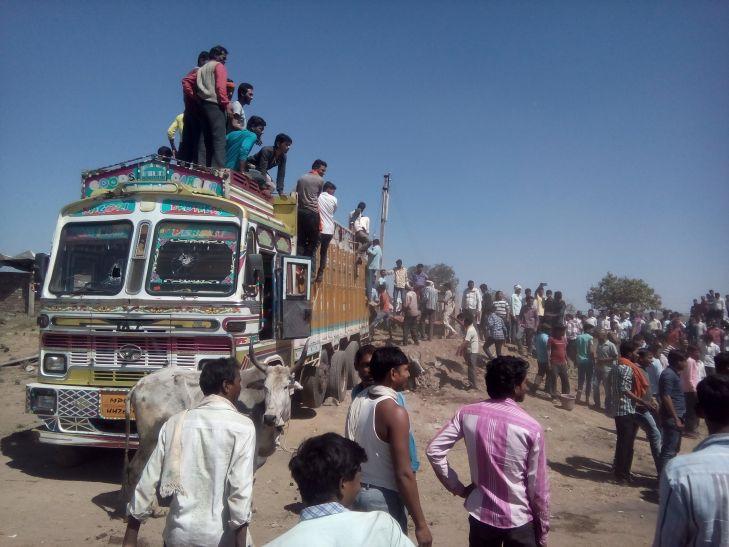 शिव सैनिकों ने बचाई 50 मवेशियों की जान