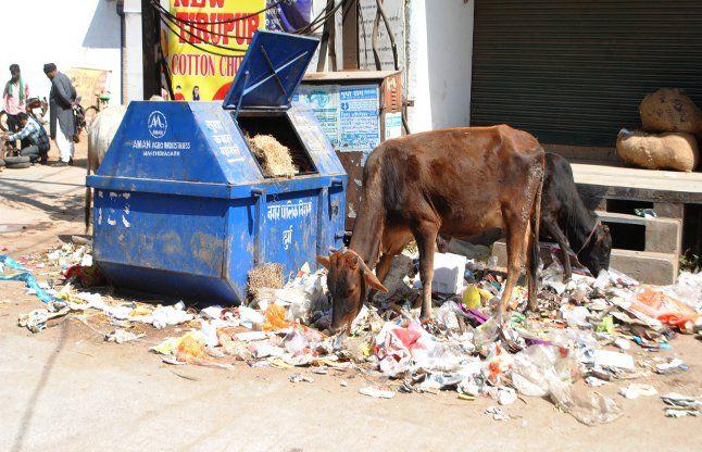 कंटेनर से बाहर छलक रहा कचरा, सफाई कामगार दूसरे दिन भी हड़ताल पर