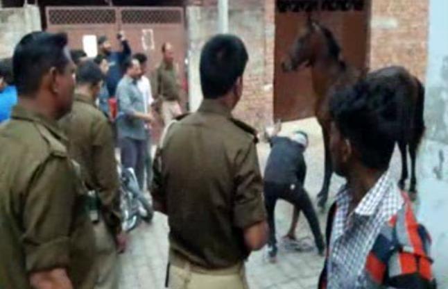 अजब-गजब: इन घोड़ों ने खूब दौड़ा-दौड़ा कर पुलिस और लोगों को काटा, देखें वीडियो