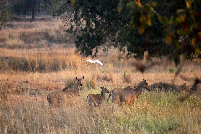 Barnawapara Wildlife