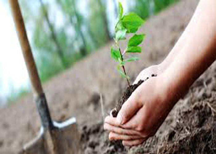 वन विहीन हो रहा बुंदेलखंड, करोड़ों रुपए हुए खर्च फिर भी नहीं आई हरियाली