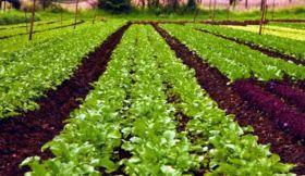 किसानों को इस तरह मिलेगी जहरीली खेती और आत्महत्या से आज़ादी