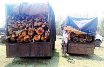 प्रतिबंधित लकडिय़ों की तस्करी, तीन वाहन जब्त
