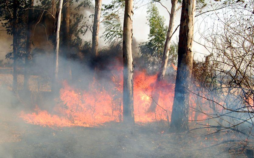 उदयगिरि में धधक उठी आग, लाखों का नुकसान