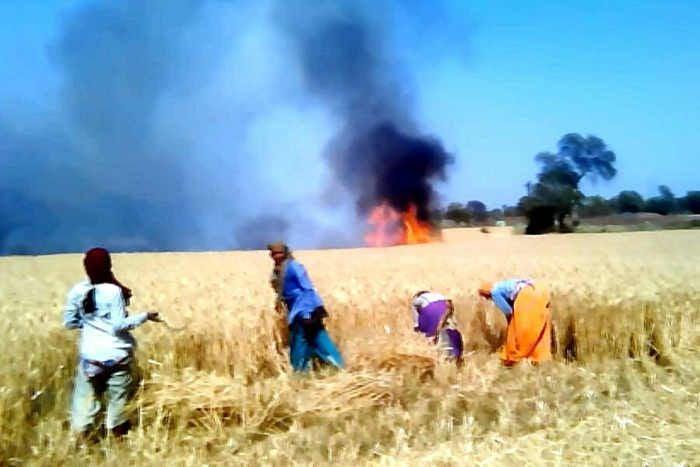 आग से 5 एकड़ की फसल खाक