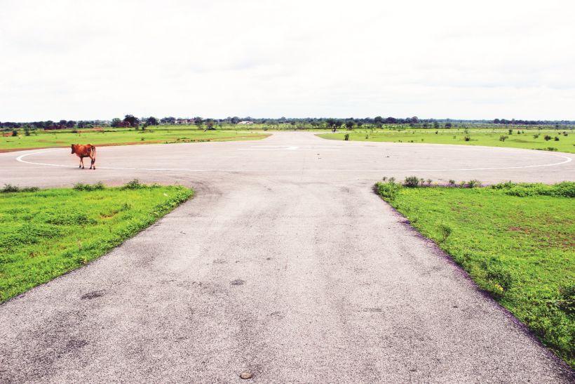 चकरभाठा की हवाई पट्टी के लिए छोटे पेड़ों की कटाई शुरू