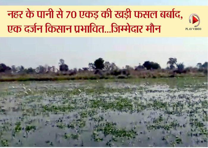 पनागर में बायें तट नहर फटी, 70 एकड़ की फसल खराब, दर्जनभर किसान प्रभावित-देखें लाइव वीडियो