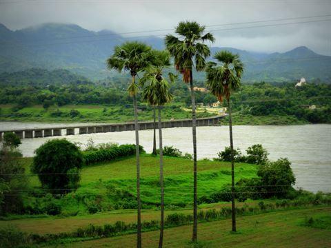 नर्मदा नदी के किनारों पर रोप जांयेंगे 6 करोड़ पौधे, ये CM शिवराज की PLAN