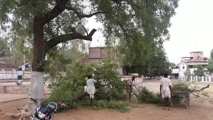 स्कूल प्रबंधन कटवा रहा था पेड़, अधिकारी ने पूछा तो बोले, हमें नहीं मालूम किसने कटवाए