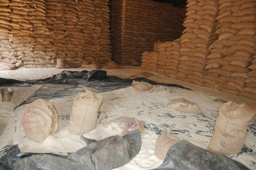26 हजार क्विंटल खराब चावल आया गुना, रोक दी गई सप्लाई