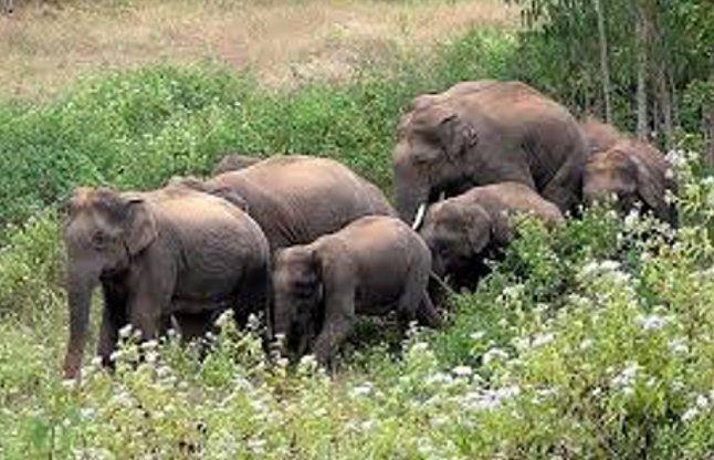 सीरियल किलर हाथी को मिल सकता है मृत्यु दंड