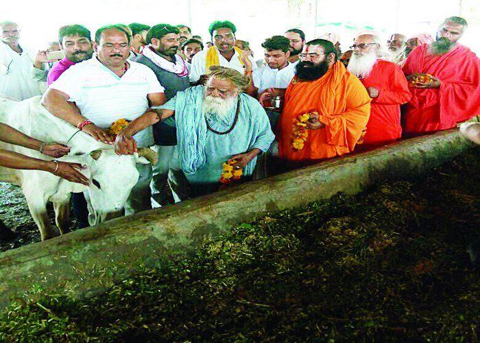 गो हत्या के विरोध में संतो ने गोशाला में पूजी गाय